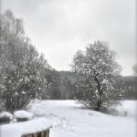 Pasieka zimą