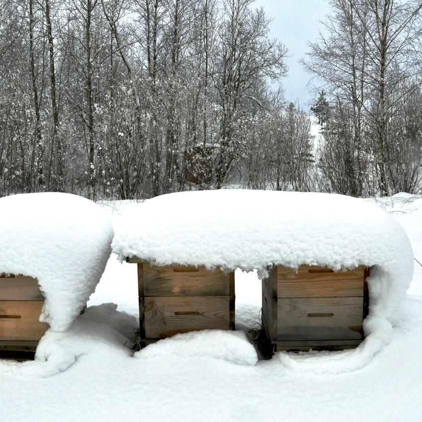 ule zimą